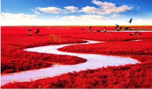 Kırmızı Sahil, Panjin, China