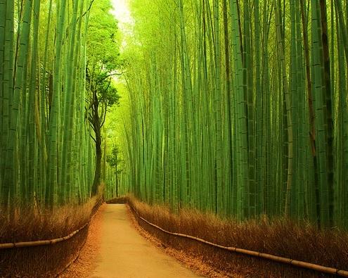 Bamboo Ormanı, Japonya