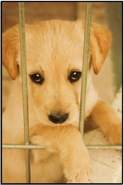 Barınaktan Bakmak için Bir Köpek Al