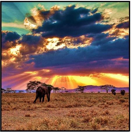 Afrika'da Safariye Git