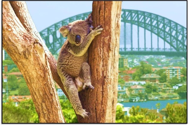 Nasıl Oraya Giderim? Sidney, Avustralya