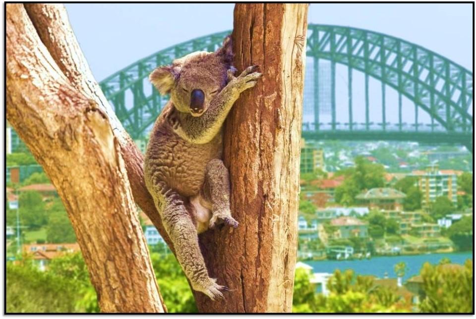 Nasıl Oraya Gidilir? Sidney, Avustralya
