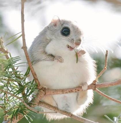 Dünyanın En Tatlı Hayvanları – Hokkaido Japonya