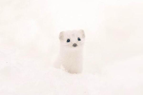 En tatlı hayvanlar - Iizuna
