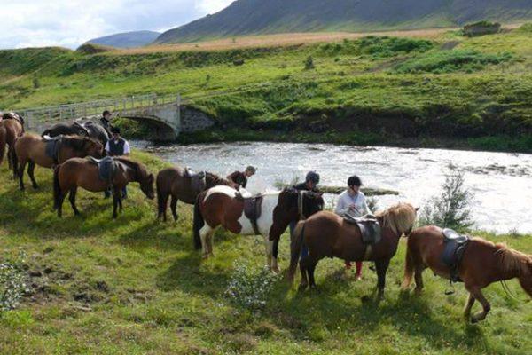 İzlanda-At-Turu