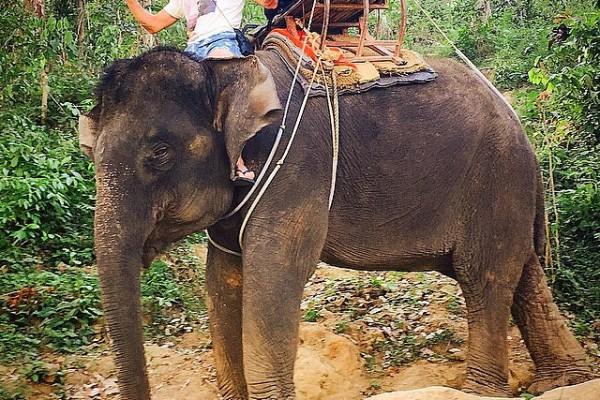 Tayland - Phuket - Fil Safari