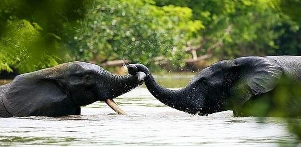 Yok-Olan-Güzellikler-Demokratik-Kongo-Cumhuriyeti'ndeki-Filler-ve-Beyaz-Gergedanlar