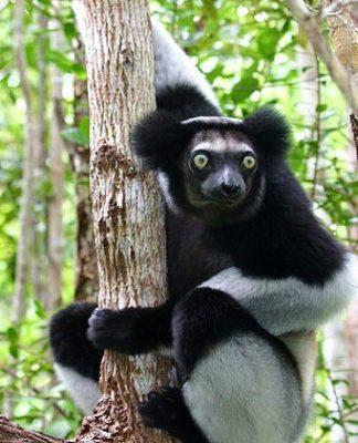 Yok-Olan-Güzellikler-Madagaskar