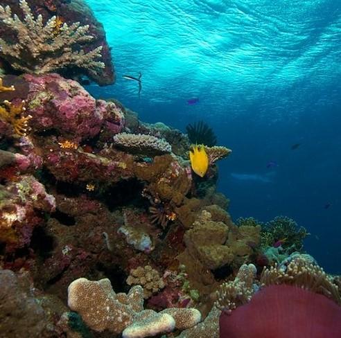 Yok-Olan-Güzellikler-Solomon-Adaları