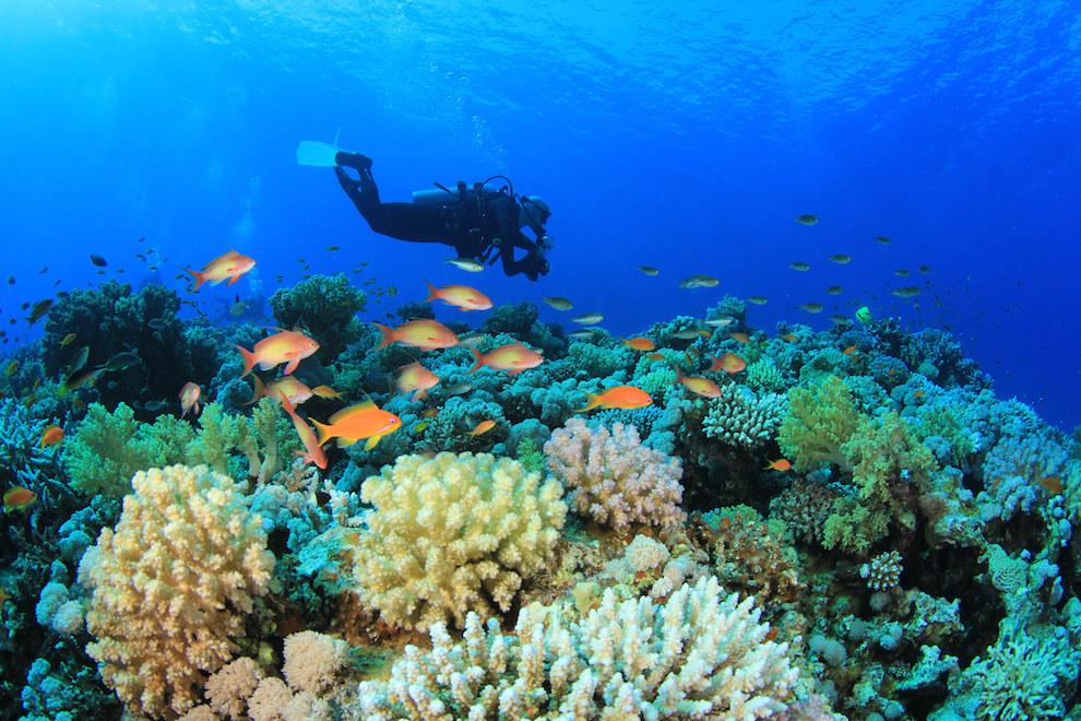 Avustralya-Büyük-Bariyer-Resifi