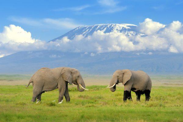 Tanzanya-Kilimanjaro-Dağı