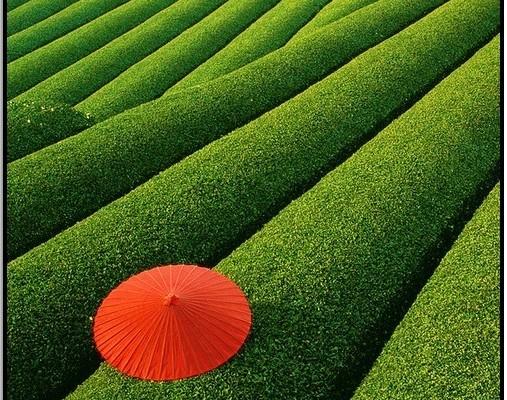 Çay Tarlaları, Çin