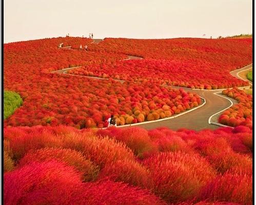 Hitachi Parkı, Japonya