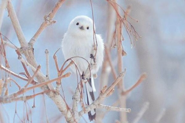 En tatlı hayvanlar - Shima Enaga