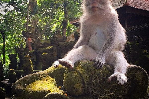 Endonezya - Bali - Ubud - Maymun Ormanı