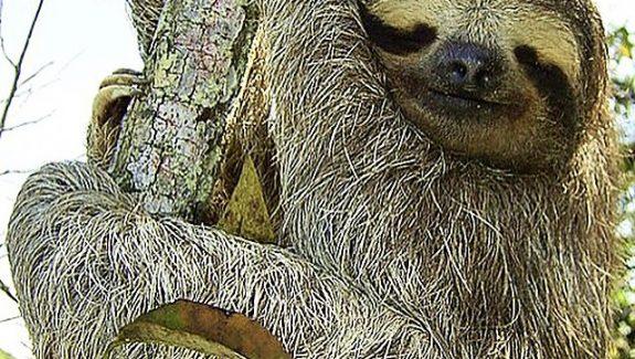 Yok-Olan-Güzellikler-Honduras-Rio-Plátano'da-Bulunan-Nadir-Hayvanları-Koruma-Alanı1