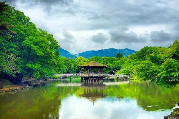 Japonya Kyoto - Nara Park
